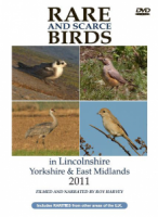 Rare and Scarce Birds in Lincolnshire, Yorkshire & East Midlands 2011
